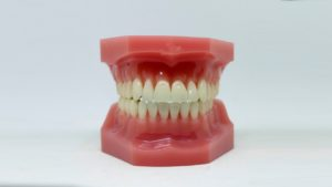 model of a mouth